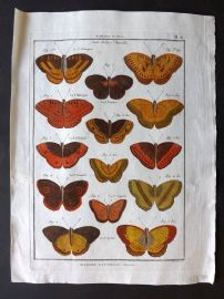 Diderot C1790 Antique Hand Col Print. Butterflies 31